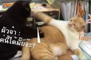 [คลิป] มนุษย์เมียมนุษย์แมวนอนนวดให้กัน
