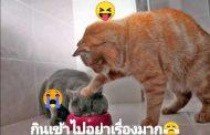 [คลิป] วิธีให้อาหารแมวที่ถูกต้อง เป็นอย่างไรไปชมกัน!!