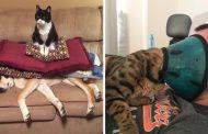 10 อันดับแมวผู้อยู่เหนือทุกสิ่งบนโลกใบนี้ ไม่เชื่อดูเอาเอง!!